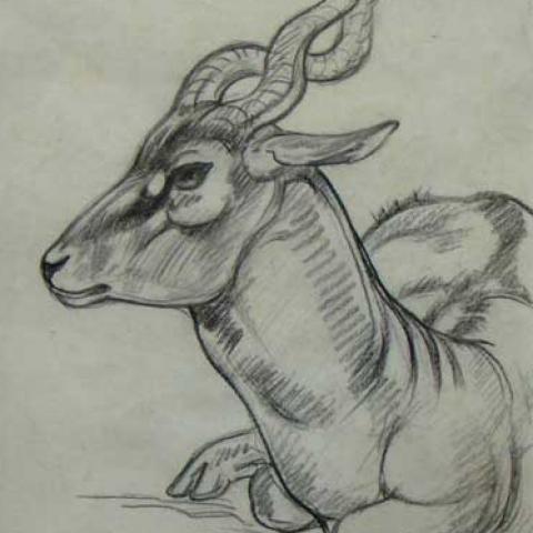 Antilope cervicape.